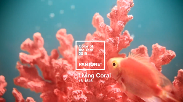 Living Coral, el color para este 2019