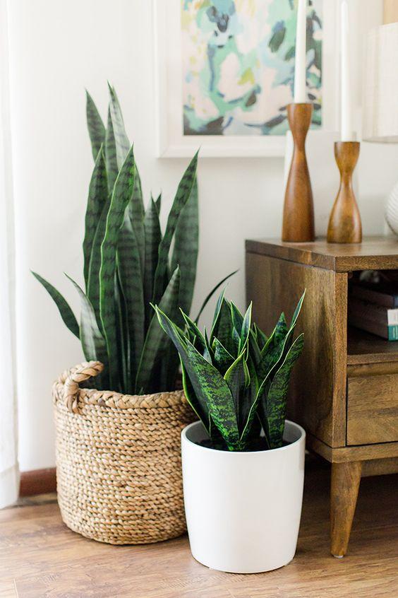 plantas para decorar tu casa